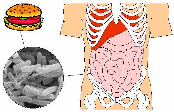 Как лечить дисбактериоз кишечника у грудничка